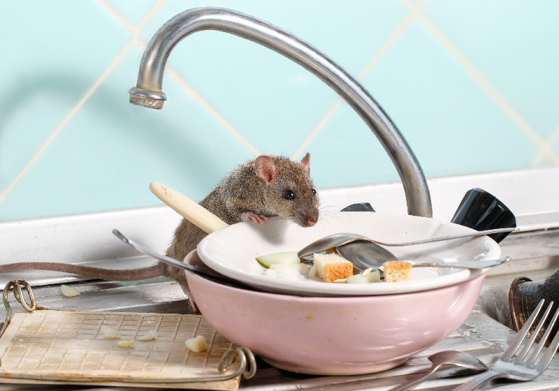 rodents in commercial buildings